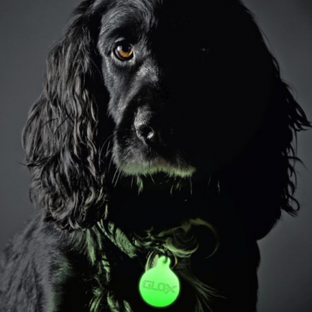 GLO-X pet tags now available